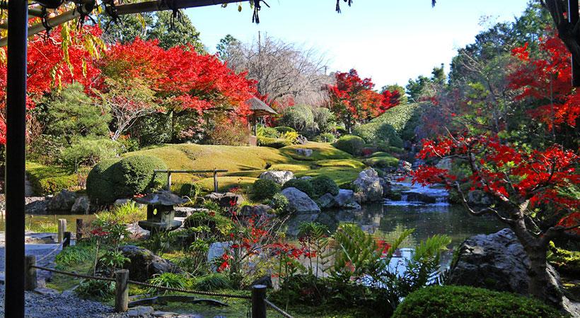 妙心寺の紅葉の写真